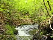 【12】大自然の恵みが清らかな水を生む