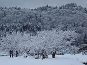 あたり一面が白銀の世界に包まれる冬(1月撮影)