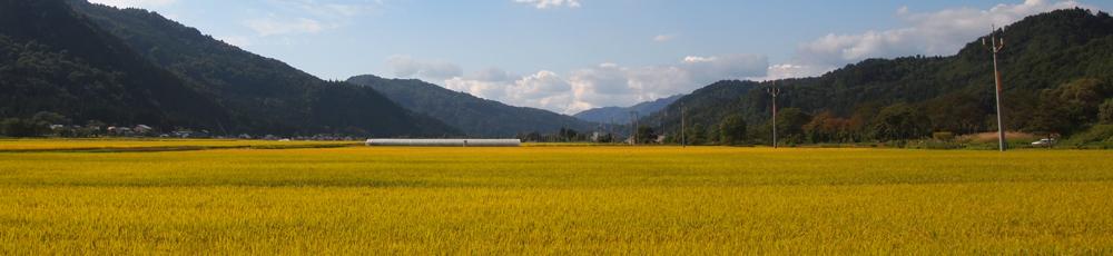 使用米について